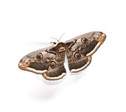 Butterfly. On a white background stock photo