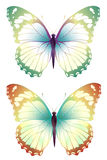 Butterfly. Drawing of beautiful butterfly in a white background Royalty Free Stock Photography