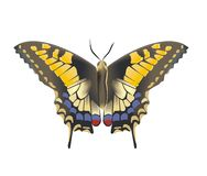 Butterfly. In the white background vector illustration