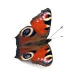 Butterfly Royalty Free Stock Photos