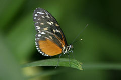Butterfly. On blade of grass Stock Image