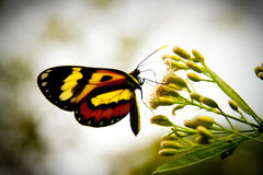 Free Butterfly Stock Photography - 12249882