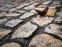Free Butterfly. Royalty Free Stock Photo - 122842955