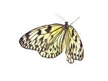 Butterfly. The yellow-black butterfly on a white background Royalty Free Stock Image