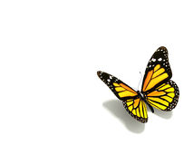 Free Butterfly Royalty Free Stock Photos - 12331388