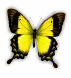 Butterfly. Yellow butterfly on white background Stock Photos