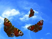 Butterfly. Three butterfly on sky background Stock Images