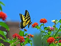 Butterfly. Beautiful flower on the garden Stock Image