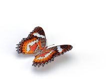 Butterfly. On the white background Stock Images
