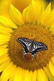 Butterfly. Stay in a beautiful butterfly to spend Royalty Free Stock Image