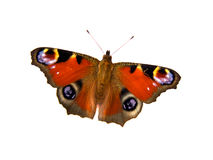 Butterfly. On white background with room for text Stock Photography
