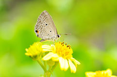 Butterfly. Stop on the flower Stock Photo