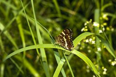 Butterfly. On green leaf resting Stock Image