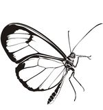 Butterfly. Illustration of butterfly for web design Stock Photos