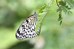 Butterfly. Resting on the leaves Stock Photo