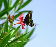 Butterfly. Black and yellow spotted butterfly on flower stock image