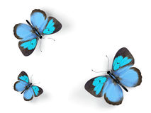 Butterfly. Royalty Free Stock Images
