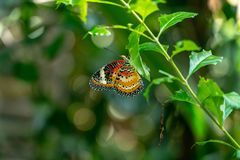 Butterfly sitting on a leafy branch. Colorful butterfly sitting and resting royalty free stock photos