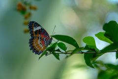 Butterfly hanging out on a leafy branch stock photo