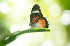 Butterfly resting on a leaf royalty free stock photos