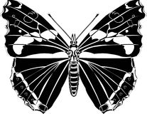 Butterfly. Black and white butterfly on white vector illustration