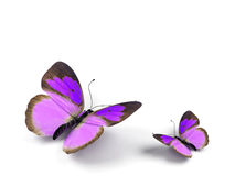 Butterfly. 3d render illustration on white background Royalty Free Stock Photos