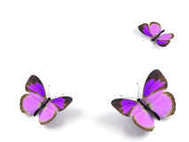 Butterfly. 3d render illustration on white background Royalty Free Stock Photo