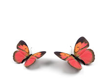 Butterfly. 3d render illustration on white background Stock Photos