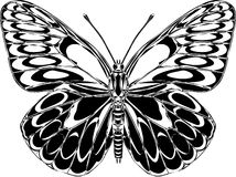 Butterfly. Black and white butterfly ink drawing vector illustration