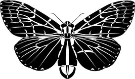 Butterfly. Black and white butterfly ink drawing royalty free illustration