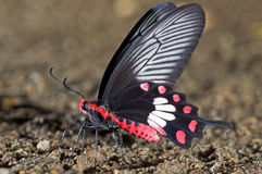 Free Butterfly Stock Images - 14780264