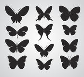 Butterfly. Silhouette vector illustration on gery background royalty free illustration