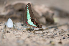 Butterfly. Beautiful butterfly at Pang si da National Park,Thailand Stock Image