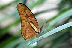 Butterfly. Beautiful butterfly, sitting on a leaf in its natural environment royalty free stock images