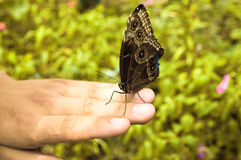 Butterfly. Exotic butterfly on human hand Stock Photo