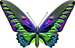 Butterfly. Colour and white butterfly line drawing stock illustration