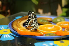 Butterfly. The butterfly seats on the plate Royalty Free Stock Photos