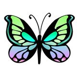 Butterfly 16 Royalty Free Stock Photo