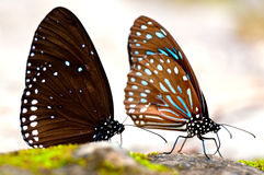 Butterfly. Macro in tropical forest at Thailand Royalty Free Stock Images