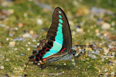 Butterfly. Colorful butterfly Resting On The Ground stock image