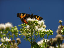 Butterfly. In flower against a clear blue sky royalty free stock image