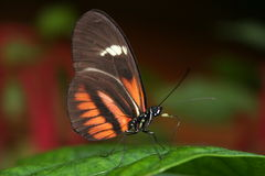Butterfly. A striking simple photo of a butterfly on a leaf Royalty Free Stock Photos