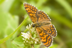 Butterfly. On a green meadow Stock Photos