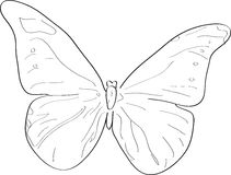 Butterfly. Outlined illustration of a butterfly Royalty Free Stock Images