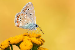 Butterfly. On the flower over yellow background Royalty Free Stock Images