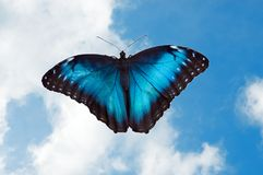 Butterfly 18 Stock Images