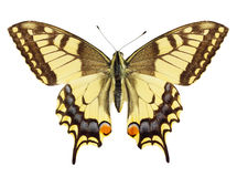 Free Butterfly Stock Image - 18384451