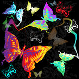 Butterfly. Black background with colorful butterflies Stock Images