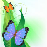 Butterfly. Two butterfly on the grass Stock Photos