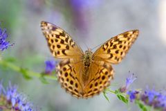 Butterfly. Orange butterfly on blue background Stock Photos